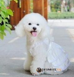 (veľkosť S  26 20 cm) Biele šaty Candy pre fenky empty 2bdfebb21e7